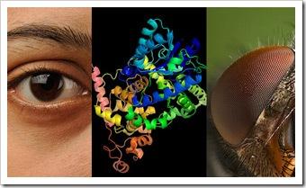 Магнитное зрение